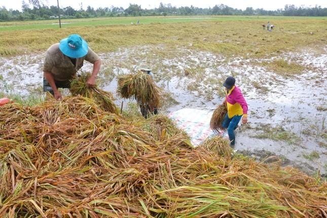 Hàng ngàn héc ta lúa và cây ăn trái bị ảnh hưởng do ngập úng ảnh 2