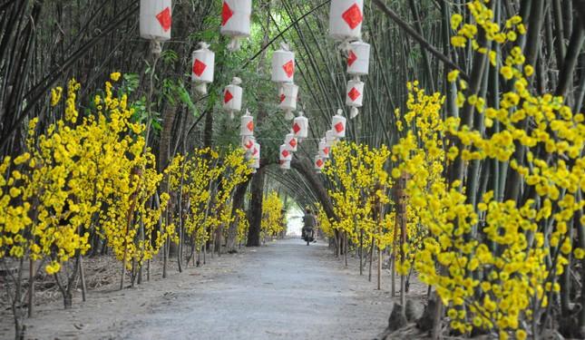 Khám phá vườn tre 'độc nhất vô nhị' ở miền Tây ảnh 15