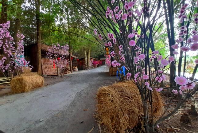 Khám phá vườn tre 'độc nhất vô nhị' ở miền Tây ảnh 16