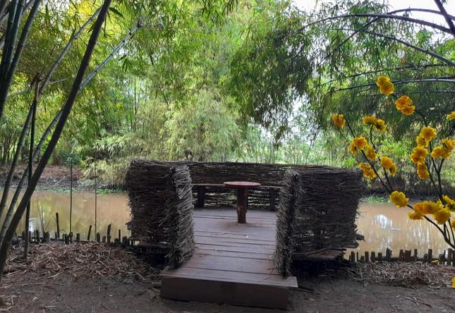 Khám phá vườn tre 'độc nhất vô nhị' ở miền Tây ảnh 9