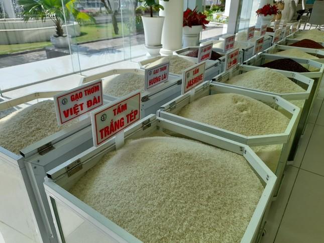 Xuất khẩu gạo đầu năm 2021 'hạ nhiệt' ảnh 1