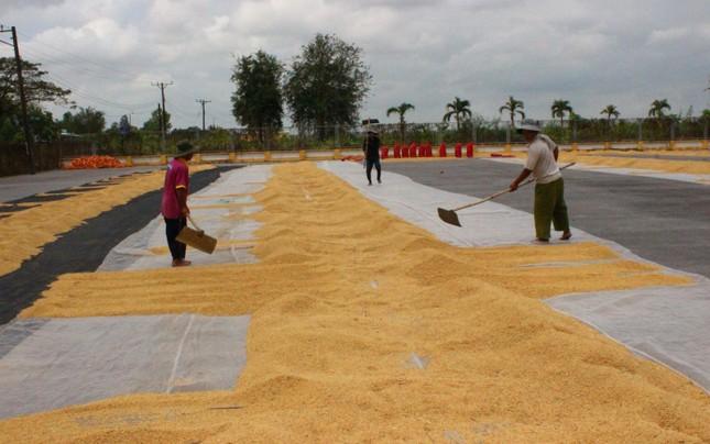 Xuất khẩu gạo tiếp tục khởi sắc? ảnh 2