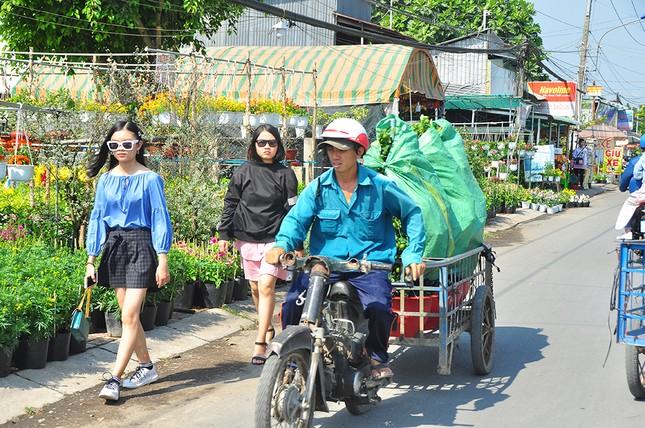 Xe kẹt cứng ở làng hoa Sa Đéc lớn nhất miền Tây ảnh 9