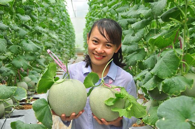 Mê mẩn vườn dưa lưới của nữ thạc sĩ 8X ở Vĩnh Long ảnh 2