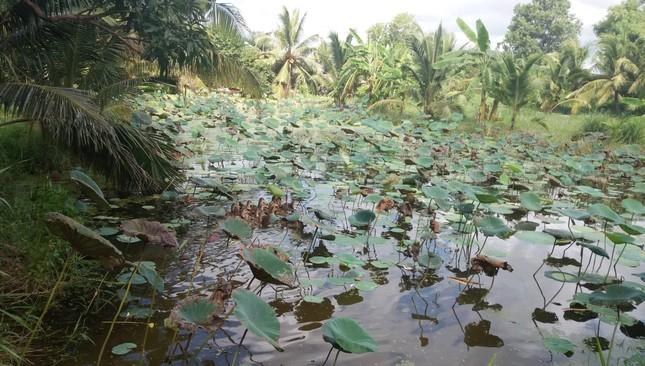 Bến Tre đầu tư hồ chứa nước ngọt 352 tỷ đồng phục vụ dân bị hạn mặn ảnh 4