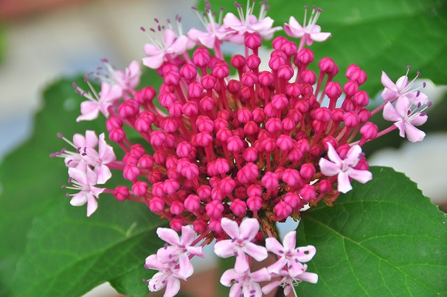 Thủ phủ hoa lớn nhất miền Tây chuẩn bị gần 3 triệu giỏ hoa phục vụ Tết ảnh 5