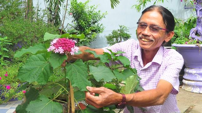 Thủ phủ hoa lớn nhất miền Tây chuẩn bị gần 3 triệu giỏ hoa phục vụ Tết ảnh 1