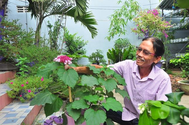 Thủ phủ hoa lớn nhất miền Tây chuẩn bị gần 3 triệu giỏ hoa phục vụ Tết ảnh 4