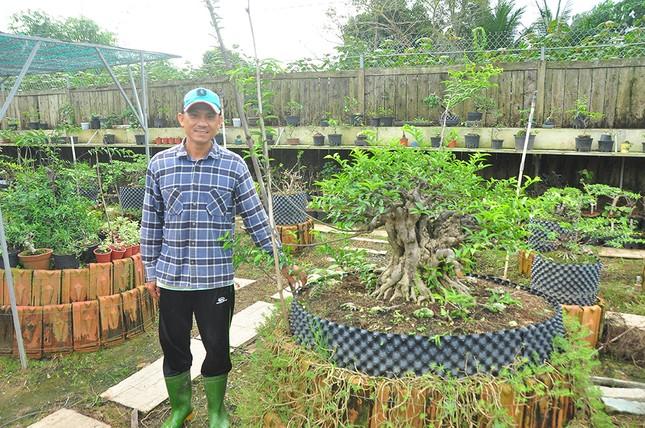 'Choáng ngợp' vườn bonsai 'khủng' ở Đồng Tháp ảnh 1