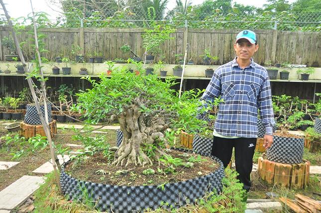 'Choáng ngợp' vườn bonsai 'khủng' ở Đồng Tháp ảnh 6
