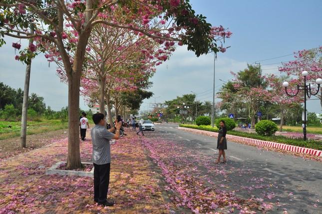 Con đường hoa kèn hồng ở miền Tây lung linh như phim Hàn thu hút giới trẻ ảnh 16