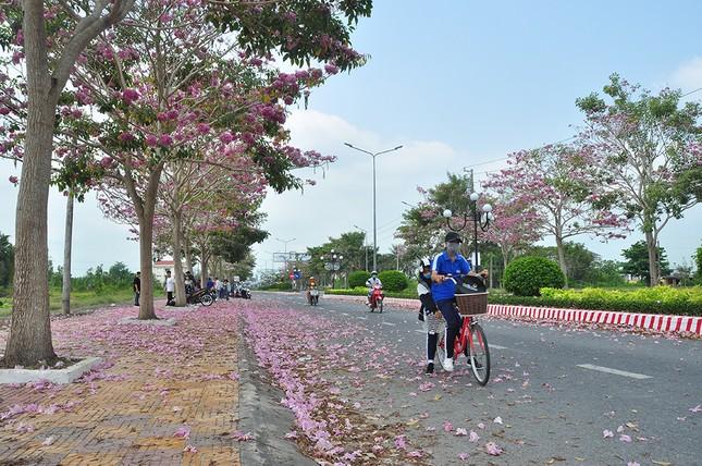 Con đường hoa kèn hồng ở miền Tây lung linh như phim Hàn thu hút giới trẻ ảnh 3