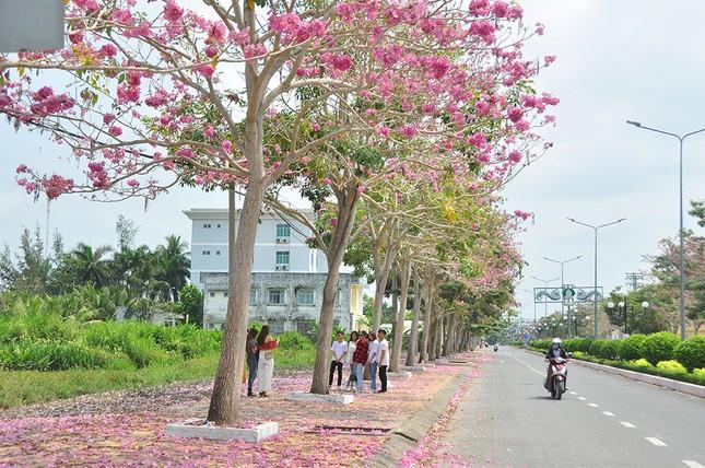 Con đường hoa kèn hồng ở miền Tây lung linh như phim Hàn thu hút giới trẻ ảnh 9