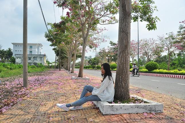 Con đường hoa kèn hồng ở miền Tây lung linh như phim Hàn thu hút giới trẻ ảnh 7