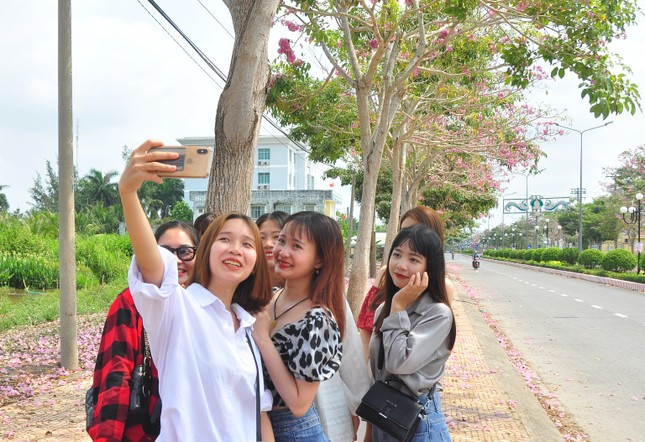 Con đường hoa kèn hồng ở miền Tây lung linh như phim Hàn thu hút giới trẻ ảnh 5