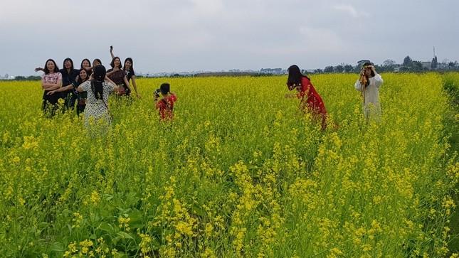 Rực rỡ cánh đồng hoa cải giữa lòng thành phố Thanh Hóa ảnh 1