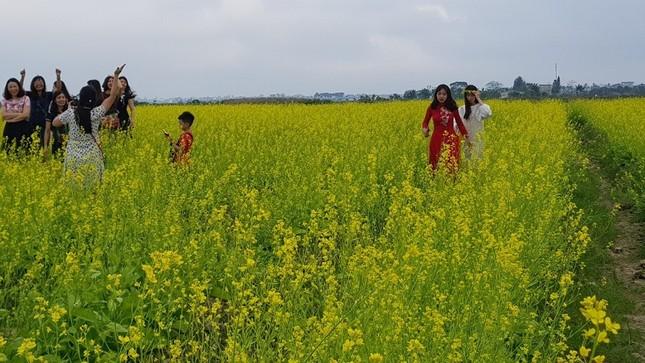 Rực rỡ cánh đồng hoa cải giữa lòng thành phố Thanh Hóa ảnh 2