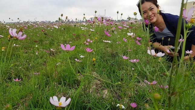 Rực rỡ cánh đồng hoa cải giữa lòng thành phố Thanh Hóa ảnh 4