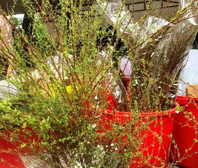 Hoa lạ, hoa giả được săn đón ở Thanh Hóa ảnh 7