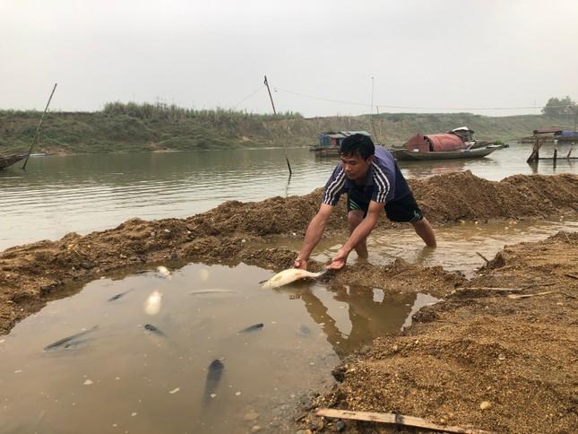 Cá lồng trên sông Chu chết bất thường ảnh 4