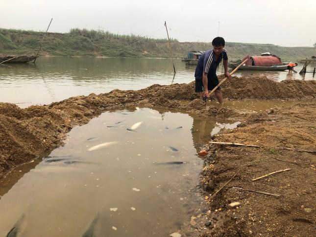 Cá lồng trên sông Chu chết bất thường ảnh 6