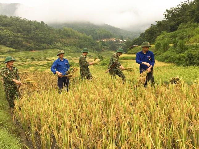 Thanh niên đội nắng giúp đồng bào vùng cao gặt lúa ảnh 2