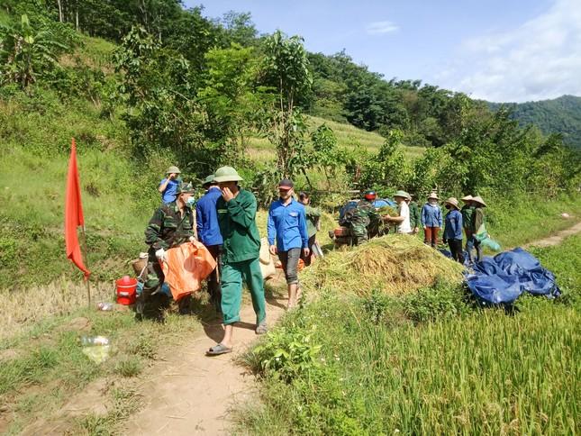 Thanh niên đội nắng giúp đồng bào vùng cao gặt lúa ảnh 3