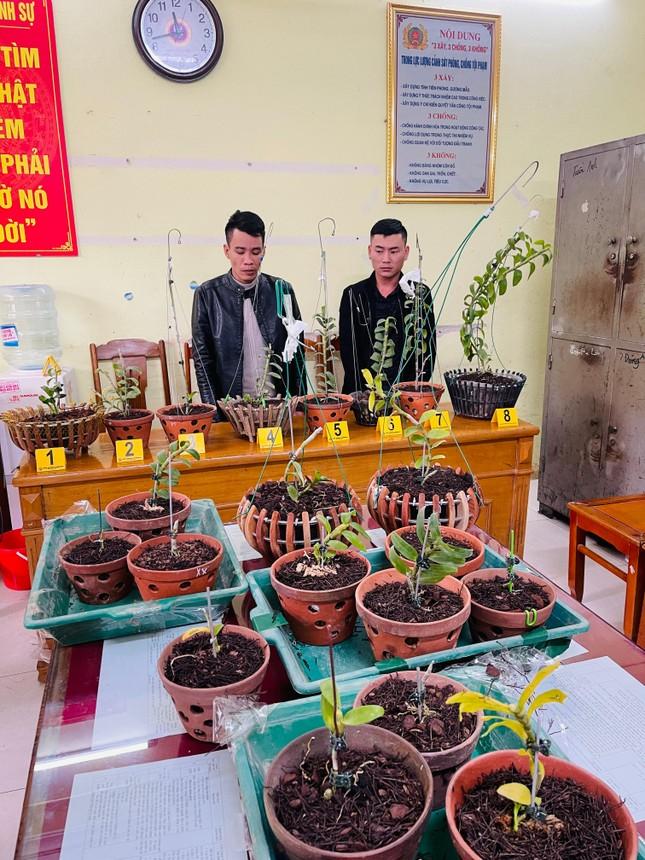 Hai kẻ bịt mặt đột nhập nhà vườn ở Thanh Hóa trộm lan đột biến tiền tỷ ảnh 2