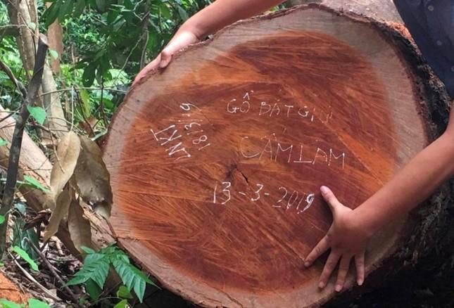 Nguyên trạm trưởng ở lâm trường bị khởi tố vì phá rừng ảnh 1