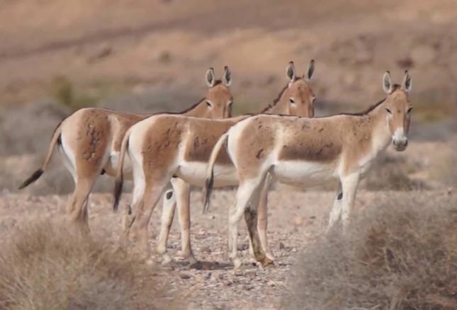 Điểm danh 10 loài động vật chạy nhanh nhất trái đất ảnh 10