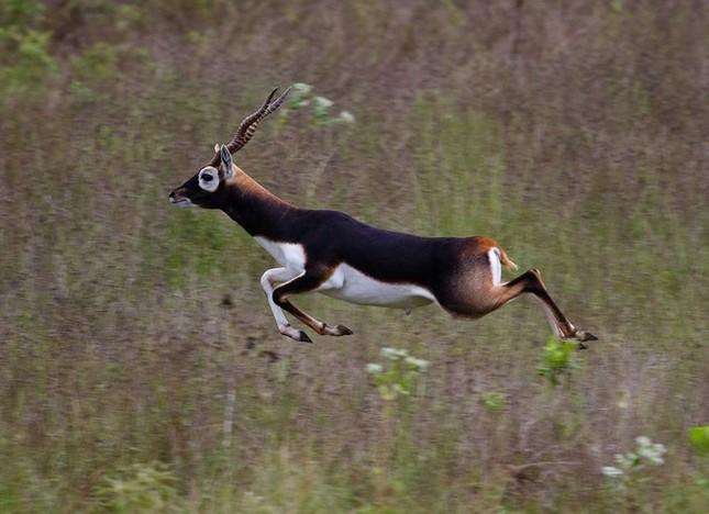 Điểm danh 10 loài động vật chạy nhanh nhất trái đất ảnh 5