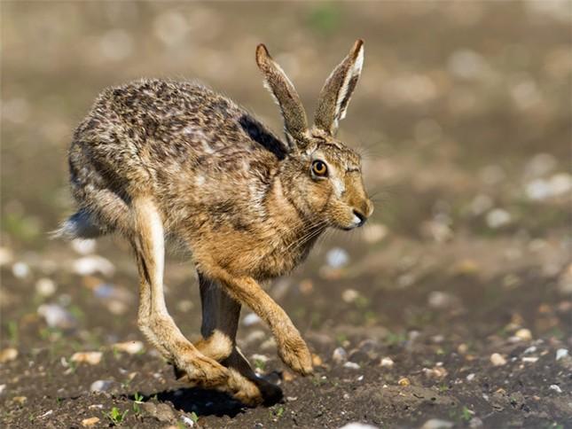 Điểm danh 10 loài động vật chạy nhanh nhất trái đất ảnh 6