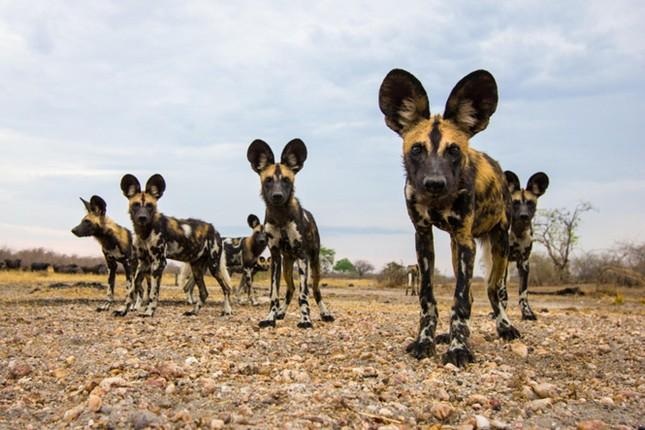 Điểm danh 10 loài động vật chạy nhanh nhất trái đất ảnh 7