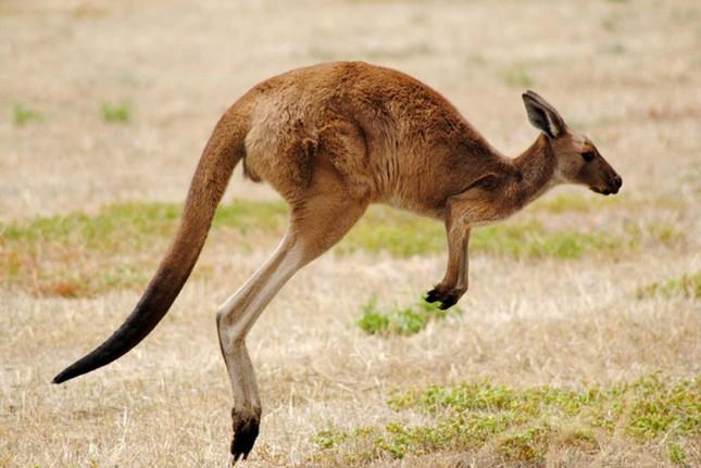 Điểm danh 10 loài động vật chạy nhanh nhất trái đất ảnh 8