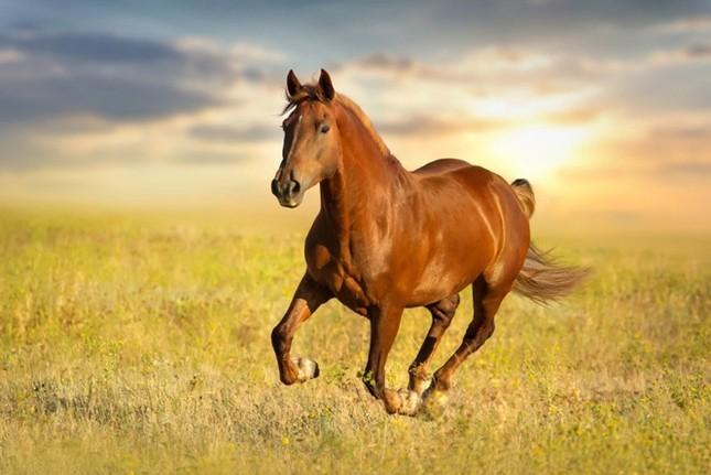 Điểm danh 10 loài động vật chạy nhanh nhất trái đất ảnh 9