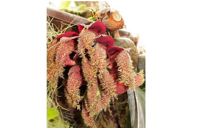 Top 10 loài hoa nặng mùi nhất thế giới ảnh 6