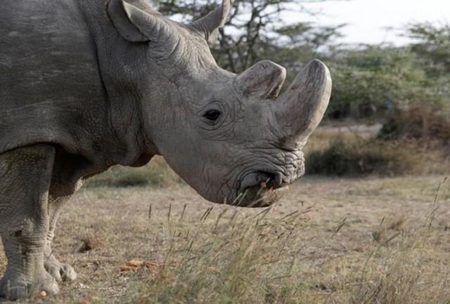 Top 5 loài động vật có kích thước 'khủng' nhất trên mặt đất ảnh 1
