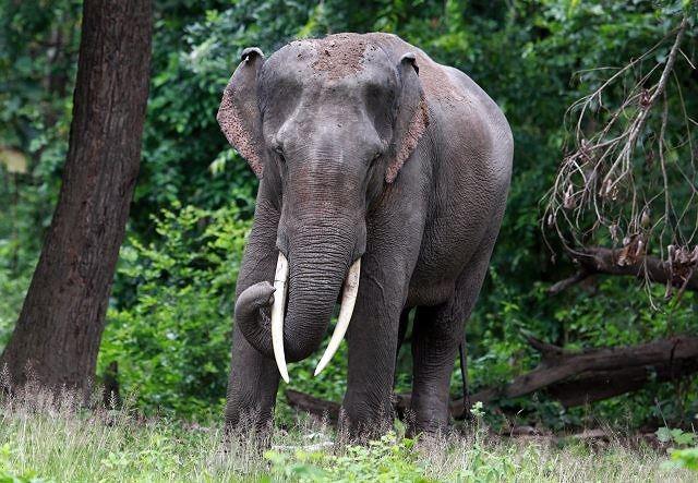 Top 5 loài động vật có kích thước 'khủng' nhất trên mặt đất ảnh 3