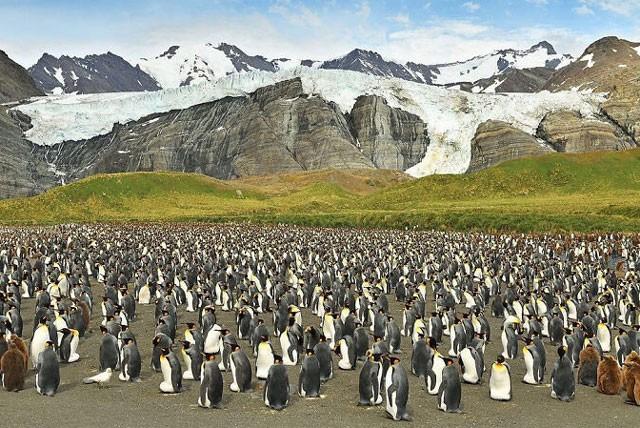 Phát hiện chim cánh cụt màu vàng kỳ lạ, 'hiếm có khó tìm' ảnh 4