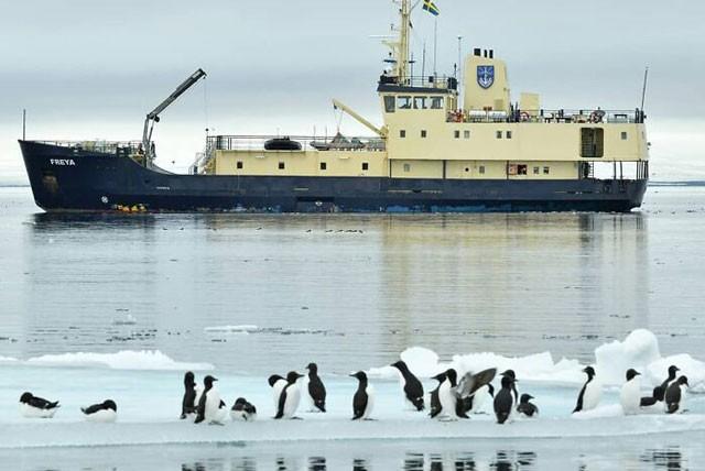 Phát hiện chim cánh cụt màu vàng kỳ lạ, 'hiếm có khó tìm' ảnh 5