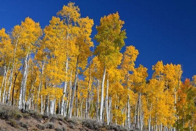 Khám phá 7 cây có tuổi thọ 'khủng' nhất thế giới từng được con người phát hiện ảnh 7