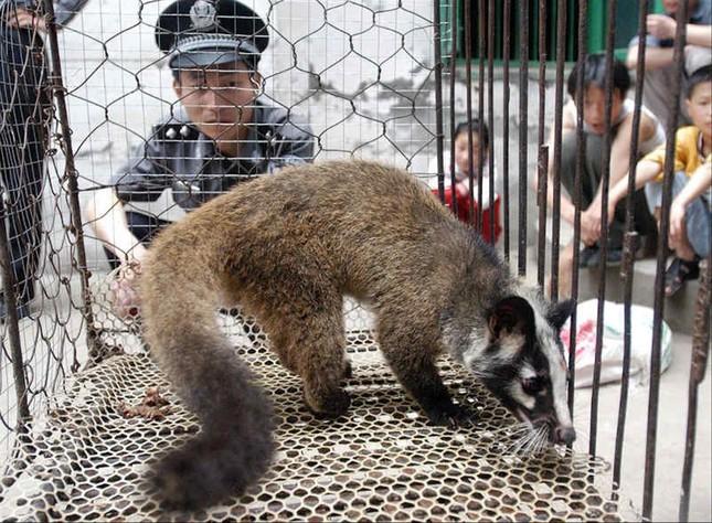 Đề xuất xử lý công chức tiêu thụ động vật hoang dã ảnh 1