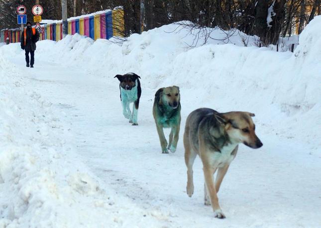 """Nga: Nhiều chú chó bỗng hóa """"xanh"""", nghi ngờ do nhiễm hóa chất độc hại ảnh 4"""