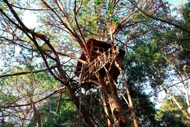 """Ngày Quốc tế về Rừng: Trải nghiệm 5 ngôi nhà cây """"độc nhất vô nhị"""" ở Việt Nam ảnh 3"""