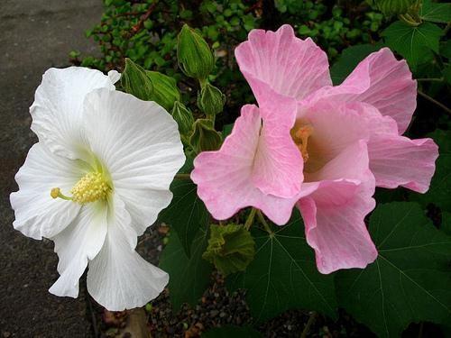 Muôn vàn tác dụng chữa bệnh của các loài hoa ảnh 5