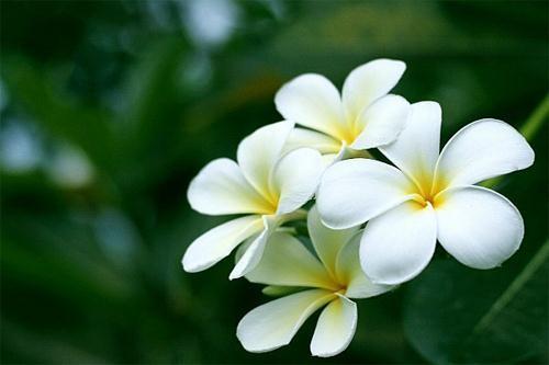 Muôn vàn tác dụng chữa bệnh của các loài hoa ảnh 2