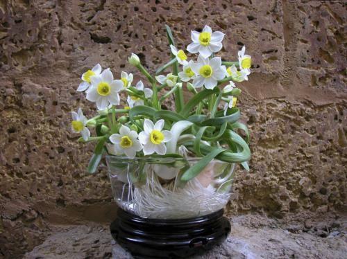 Những loại hoa được cắm nhiều ngày Tết nhưng lại chứa chất cực độc ảnh 5