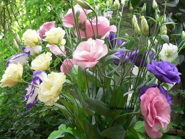 Năm mới cắm những loại hoa này, gia chủ vừa hạnh phúc vừa 'tiền vào như nước' ảnh 3