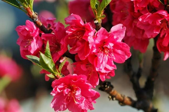 Năm mới cắm những loại hoa này, gia chủ vừa hạnh phúc vừa 'tiền vào như nước' ảnh 2