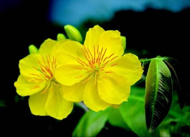 Năm mới cắm những loại hoa này, gia chủ vừa hạnh phúc vừa 'tiền vào như nước' ảnh 4